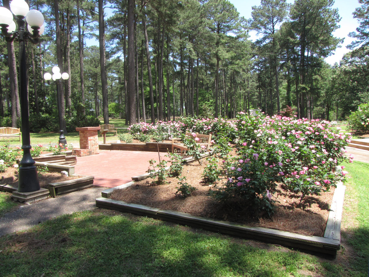 8 Things You May Not Know About The American Rose Center Sb Magazine