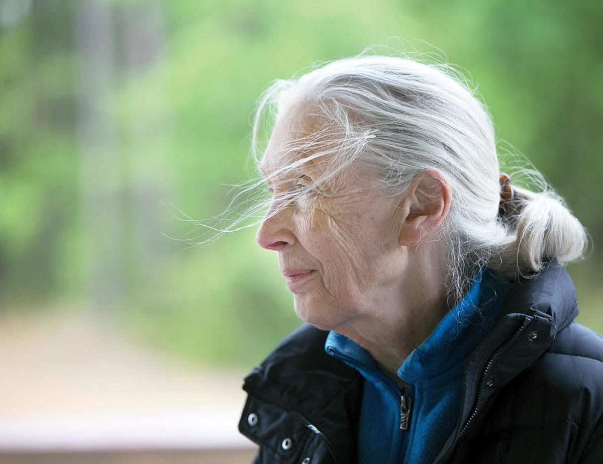Jane Goodall at the Chimp Haven